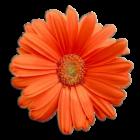 FlowerPower_v1